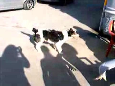 El segundo perro más tonto del mundo vive en Porrúa