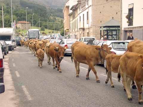 Autovía Ya! N-634 Unquera -Llanes